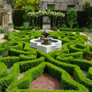 Buxus Hedging 17cm