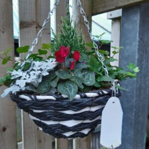 Hanging Basket Premium 12in