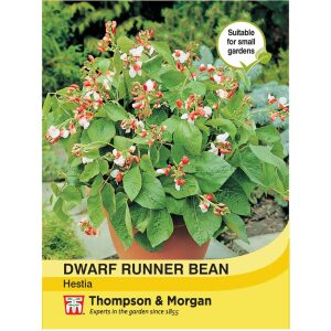 Dwarf Runner Bean Hestia