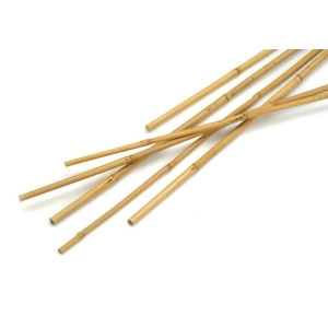 Growers Bamboo Cane 2.4m 10Pk