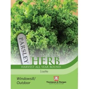 Herb Parsley Lisette