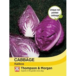 Cabbage Kalibos Filderkraut F1 Hybrid