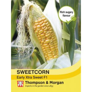 Sweet Corn Early Xtra Sweet F1 Hybrid