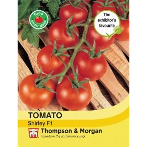 Tomato Shirley F1 Hybrid