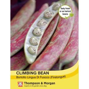 Climbing Bean Borlotto Lingua