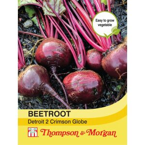 Beetroot Detroit 2 Crimson Globe