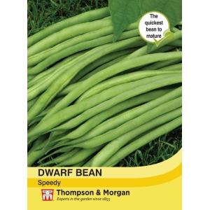 Dwarf Bean Speedy