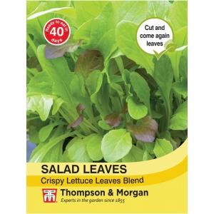Salad Leaves Crispy Lettuce Blend