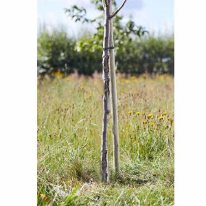 Softwood Round Tree Stake 150cm