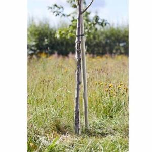 Softwood Round Tree Stake 150cm