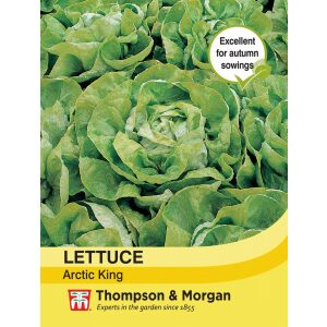 Lettuce Artic King