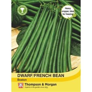 Dwarf Bean Boston