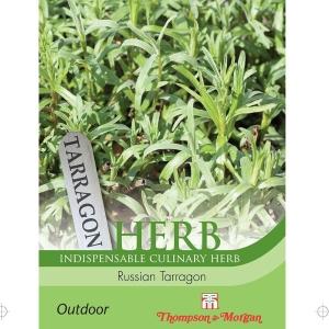 Herb Russian Tarragon