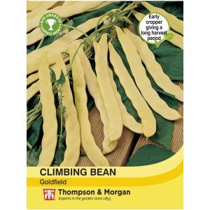 Climbing Bean Goldfield