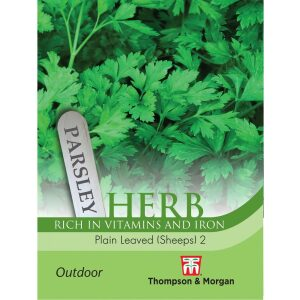 Herb Parsley Plain Leaved Sheeps 2