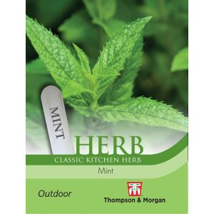 Herb Mint Peppermint