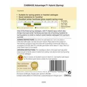 Cabbage Spring Advantage F1 Hybrid