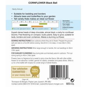 Cornflower Black Ball