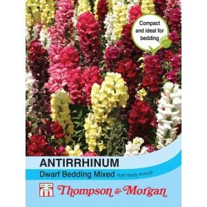 Antirrhinum Dwarf Bedding Mixed