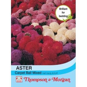Aster Carpet Ball Mixed