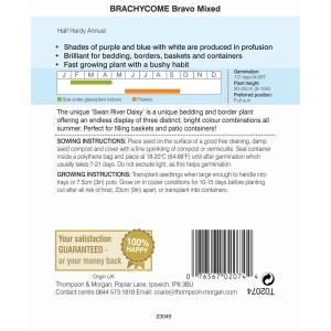 Brachycome Bravo