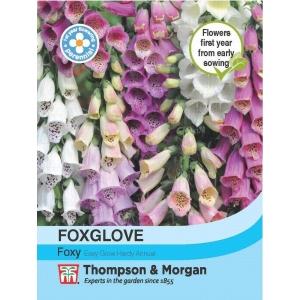 Foxglove Foxy