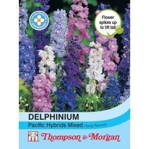 Delphinium Pacific Hybrids Mixed