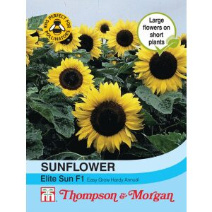 Sunflower Elite Sun F1 Hybrid