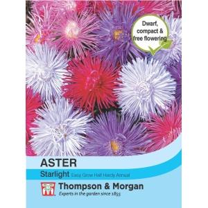 Aster Starlight Mixed