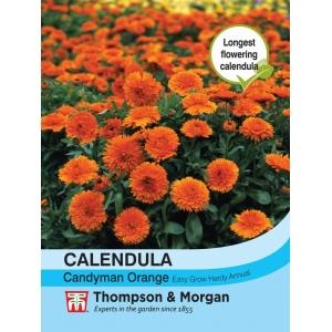 Calendula Candyman Orange