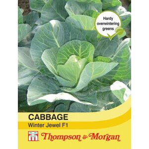 Cabbage Winter Jewel F1 Hybrid