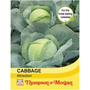 Cabbage Attraction