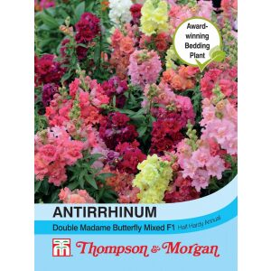 Antirrhinum Double Madam Butterfly Mixed