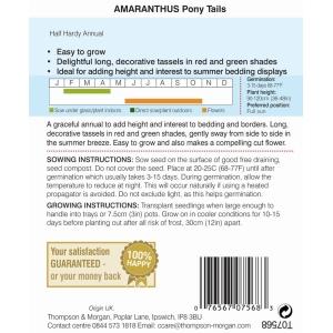 Amaranthus Pony Tails
