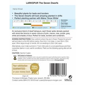 Larkspur The Seven Dwarfs