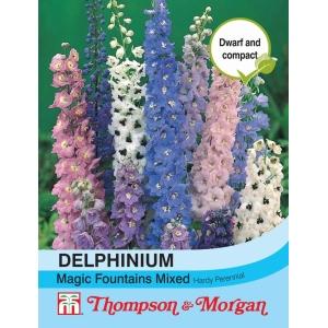 Delphinium Magic Fountains