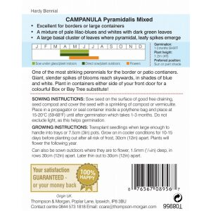 Campanula pyramidalis Mixed