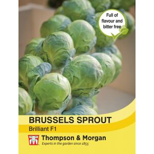 Brussels Sprout Brilliant F1 Hybrid