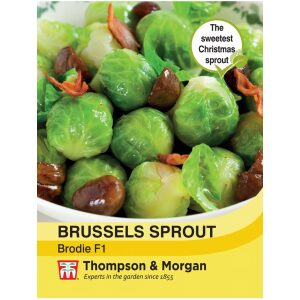 Brussels Sprout Brodie F1 Hybrid