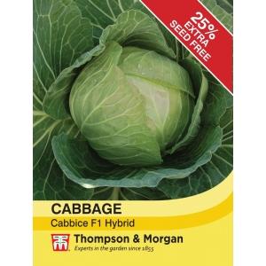 Cabbage Cabbice F1 Hybrid