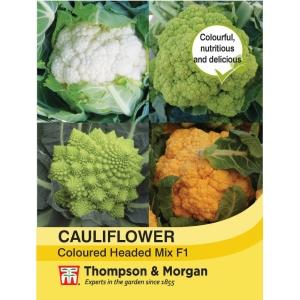 Cauliflower Coloured Mix F1 Hybrid