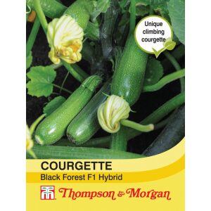 Courgette Black Forest F1 Hybrid