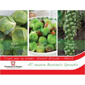 Brussels Sprouts All Season