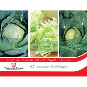Cabbages All Season