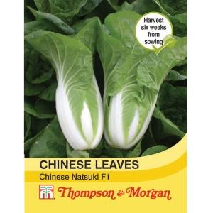 Cabbage chinese Natsuki F1 Hybrid