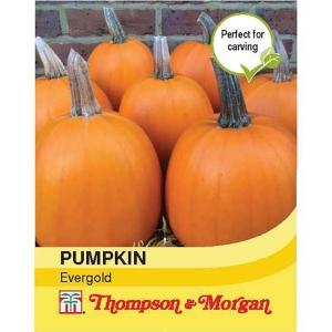 Pumpkin Evergold