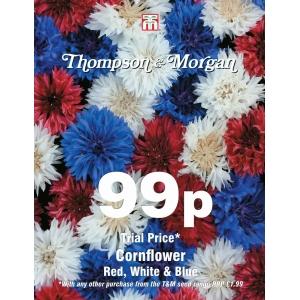 Cornflower Red White And Blue