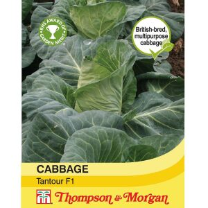 Cabbage Tantour F1 Hybrid