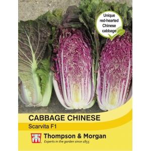 Cabbage Chinese Scarvita F1 Hybrid