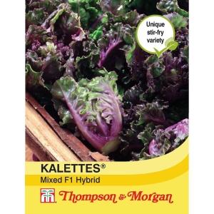 Kalettes Garden Mix F1 Hybrid